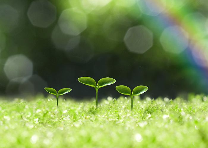 苔の上に生える新芽と虹